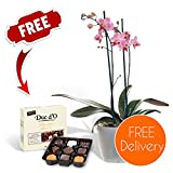 Fresh Flowers Delivered - FREE UK Delivery - Potted Indoor Twin-Spiked Orchid Plant with FREE Chocolates and Flower Food and BONUS Ebook Guide - Perfect for birthdays, anniversaries and thank you gifts