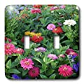 3dRose LLC lsp_3145_2 Zinnias, Double Toggle Switch