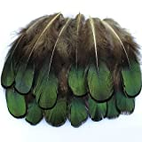 20 Pcs Green Lady Amherst Bronze Iridescent Plumage Feathers inches long 1.5-3 inches
