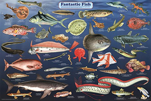 Laminated Fantastic Fish Educational Science Chart Poster Laminated Poster 36 x 24in (Aquarium Fish Chart compare prices)