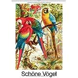 """Sch�ne V�gel (Wandkalender 2013 DIN A4 hoch): Die sch�nsten Vogelbilder aus Brehms Tierleben (Monatskalender, 14 Seiten)von """"francisco cereal"""""""