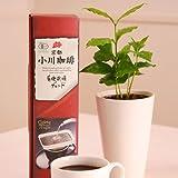 【送料無料】小川珈琲とコーヒーの木のセット【父の日ギフトお届け6/18~6/20】