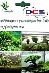 DCS (067) 50 Aquarium grass aquatic plant Seeds family easy planting ornamental
