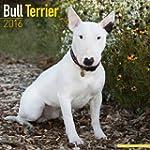 Bull Terrier Calendar 2016 (Square)