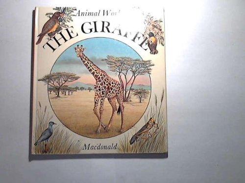 giraffe-the-animal-world-s