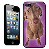 Fancy A Snuggle - Carcasa rígida para Apple iPhone 5, diseño de braco de Weimar, color morado