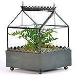H Potter Square Terrarium Gothic Style Planter Box
