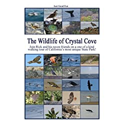 The Wildlife of Crystal Cove