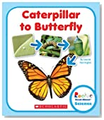 Caterpillar to Butterfly (Rookie Read-About Science (Paperback))