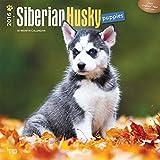 Siberian Husky Puppies 2016 Wall Calendar