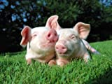 Cute Pair of Piglets - Premium Quality Heavyweight Mouse Mat