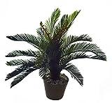 Fourwalls Decorative Artificial Cycas Palm Floor Plant (75 cm)