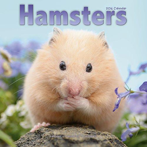 Hamsters Calendar 2016 (Square)