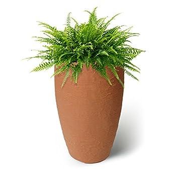 Terra Cotta Planter