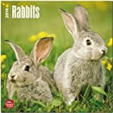 Rabbits Calendar (Multilingual Edition)