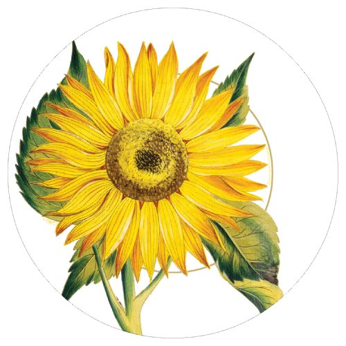 Entertaining with Caspari Set of 2 Sunflowers Dinner Paper Plate Pack Candleages; 16 plates total  sc 1 st  WordPress.com & WHITE COTTON DINNER NAPKINS | WHITE COTTON DINNER NAPKINS