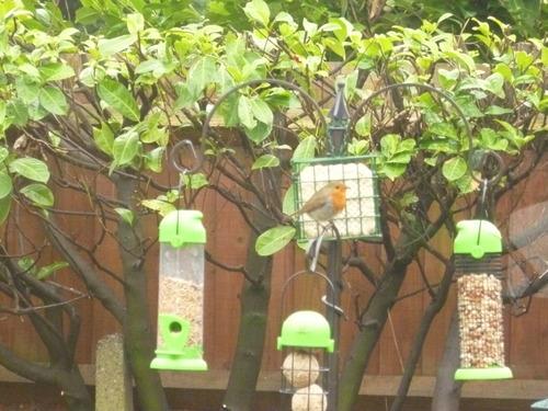 Kingfisher Bird Feeding Station Garden