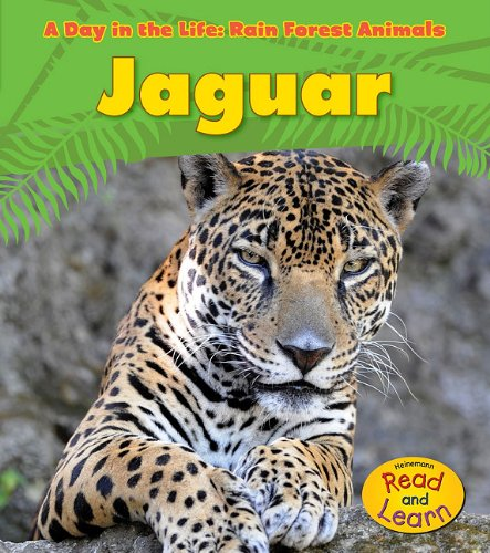 jaguar-a-day-in-the-life-rain-forest-animals