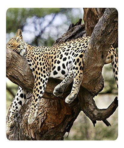 Brain114 Top Quality Oblong Mouse Pad Sleeping Leopard Cute Designs Mousepad Pattern Print Mouse Pads
