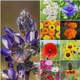 2,000 Seeds, Wildflower Mixture (Bird & Butterfly) Seeds by Seed Needs