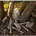 Skelett Gebeine Totensch�del mit Leuchtaugen, Sound und Bewegungsmelder 18 teiliges Horror Deko Schocker Set reagiert auf Bewegung und beginnt mit den Augen zu blinken und zu lachen wenn jemand den Weg des Knochenmonsters kreuzt Halloween Horror Deko Sensation USA Hammer
