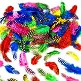 Toy - German Trendseller® 72 x Bunte Weiche Federn mit Punkten ┃ Perlhuhnfedern im Farbmix ┃ zum Basteln für Kinder ┃