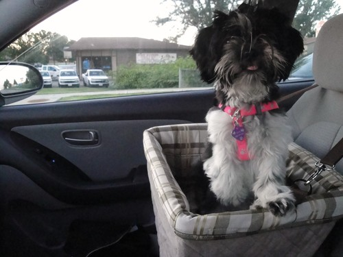 Dog Booster Seat Reviews And Ratings Best Dog Car