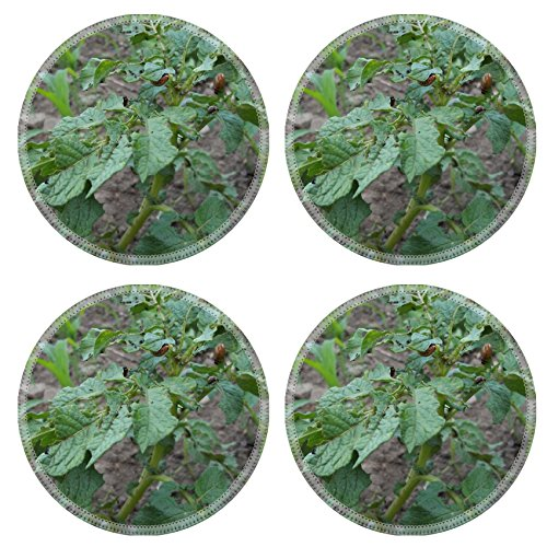 luxlady-round-coasters-potato-colorado-potato-beetle-natural-rubber-material-image-375232