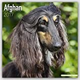 Afghan Hound Calendar 2017 - Afghan Dog Calendar - Dog Breed Calendars - 2016 - 2017 wall calendars - 16 Month by Avonside