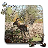 Angelique Cajams Safari Animals - South African Impala with horns - 10x10 Inch Puzzle (pzl_26816_2)