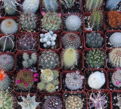 9 Gorgeous Cactus Collection