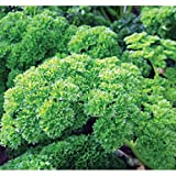 Herb Seeds - Parsley Bravour - 8000 Seeds