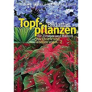 Bildatlas Topfpflanzen für Zimmer und Balkon: Steckbriefe und Tabellen von A - Z (Bildatlanten)