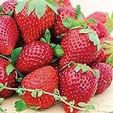 Strawberries Alive! 100% All-Natural Fertilizer (3 lbs)