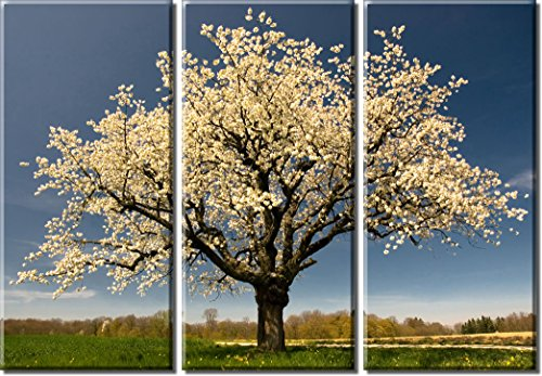 Picture Sensations Framed Huge 3-Panel Sakura Cherry Tree Blossom Giclee Canvas Print