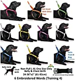 DEAF-DOG-White-Color-Coded-S-M-L-XL-Buckle-Dog-Collars-NoLimited-Hearing-PREVENTS-Accidents-By-Warning-Others-of-Your-Dog-in-Advance-S-M-Collar-10-17Lx1W