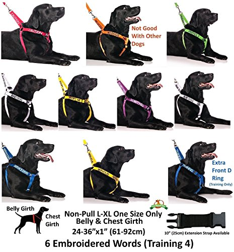 NERVOUS-Yellow-Color-Coded-S-M-Buckle-Dog-Collar-Give-Me-Space-PREVENTS-Accidents-By-Warning-Others-of-Your-Dog-in-Advance