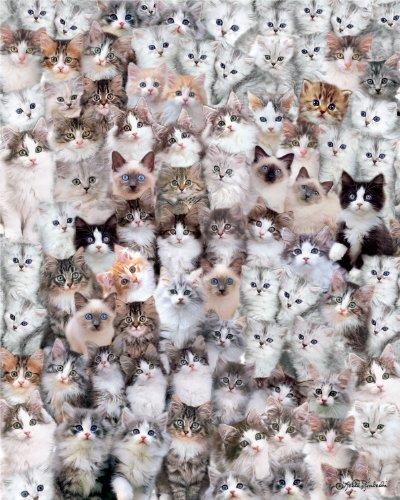 Andrews + Blaine Ltd Cat Montage - 500 Pc Puzzle