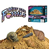 Mine for Fossils - Excavate 10 Real Fossils with this Fun Digging Kit!by Discover with Dr. Cool