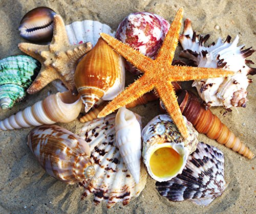 starfish-and-mixed-medium-shells-sea-shells-beach-seashells-13-shells