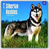 Siberian Huskies 2017 Square
