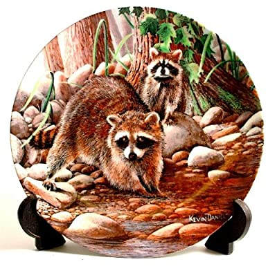 Knowles The Raccoon by Kevin Daniel from Encyclopaedia Britannica Friends of the Forest Collection CP447