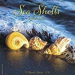Sea Shells 2016 Calendar