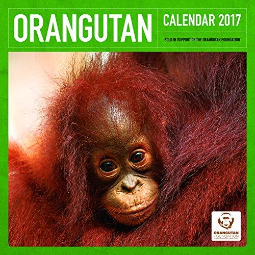Orangutan Foundation OfficialAL 2017 UK Square Wall Calendar
