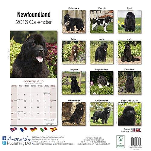 Newfoundland Calendar 2016 (Square)