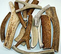 Fresh Montana XXL Antlers Dog Chew, 8 to 10-Inch from Top Dog Chews - Single Antler