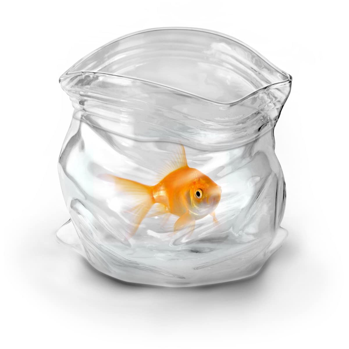 goldfish in bag bowl