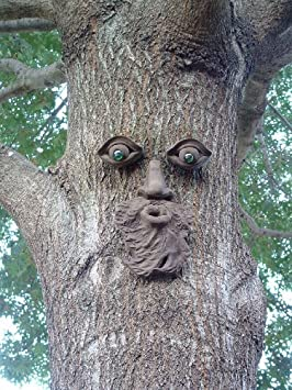 Whistling Pete Tree Face