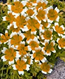Just Seed - Flower - Limnanthes douglasii - Poached Egg Plant - 1500 Seeds