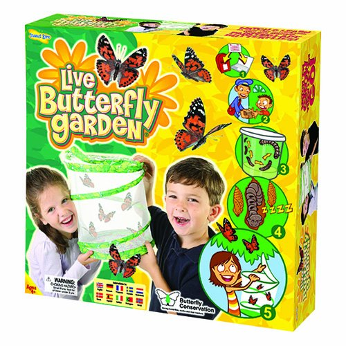 after being barraged by the commercials on television i ordered this live butterfly garden for my sons birthday first buyers should understand exactly - Live Butterfly Garden